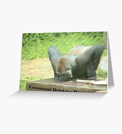 Communal Drinking Water Greeting Card