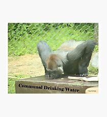 Communal Drinking Water Photographic Print