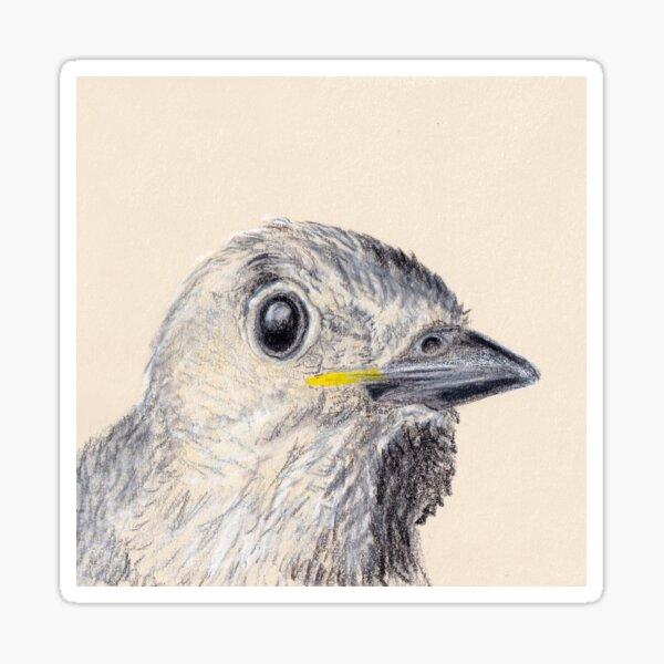 Curious Baby Bird Sticker