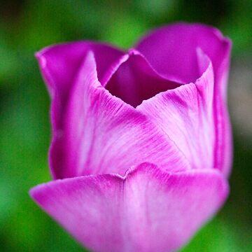 Purple on Green by RichardKeech