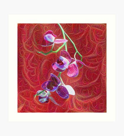 Phalaenopsis B Art Print