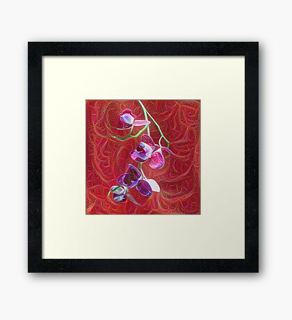 Phalaenopsis B Framed Print