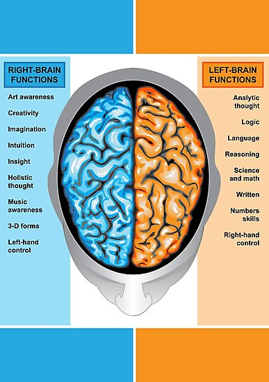 Human brain left and right functions by MEDUSA GraphicART