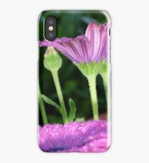 Purple And Pink Daisy Flower in Full Bloom iPhone Case