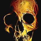 Skull by Rostislav Bouda