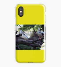Pelican Roost iPhone Case/Skin