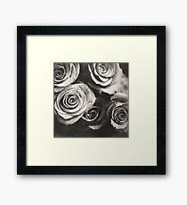 Medium format analog black and white photo of white rose flowers Framed Print