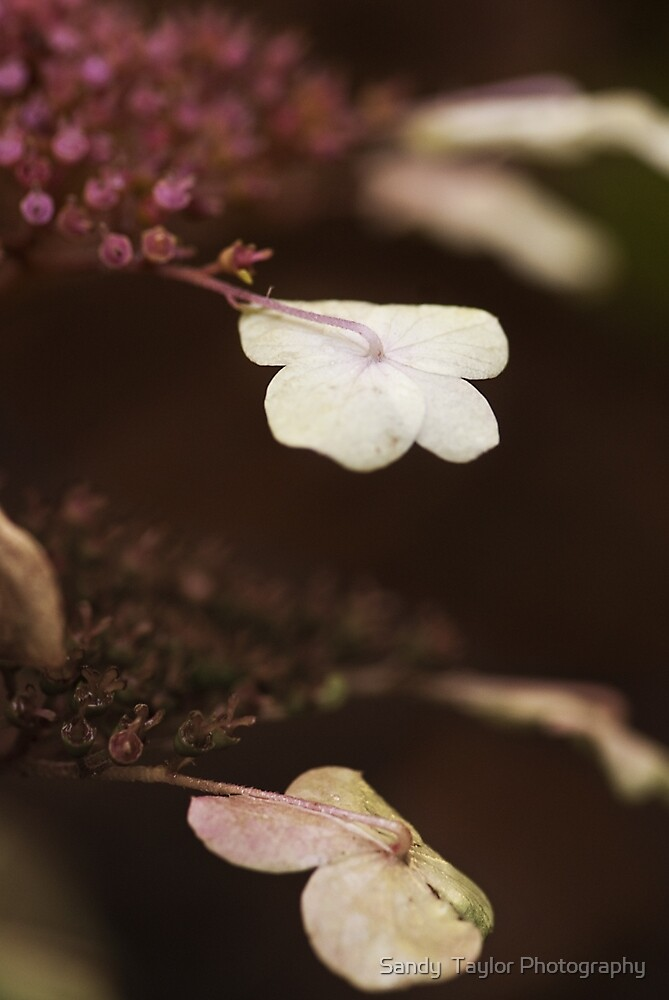 Petal over Petal by Sandy  Taylor Photography