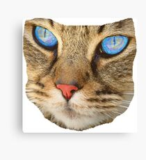 blue eyed cat Canvas Print