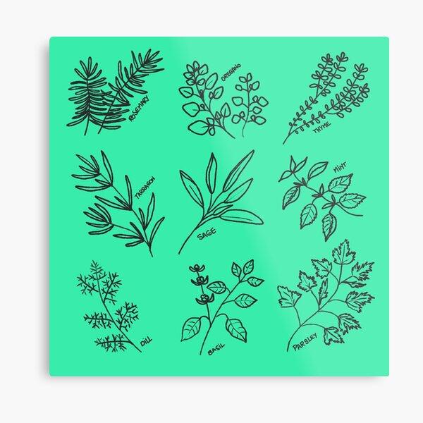 Culinary fresh herbs pattern Metal Print