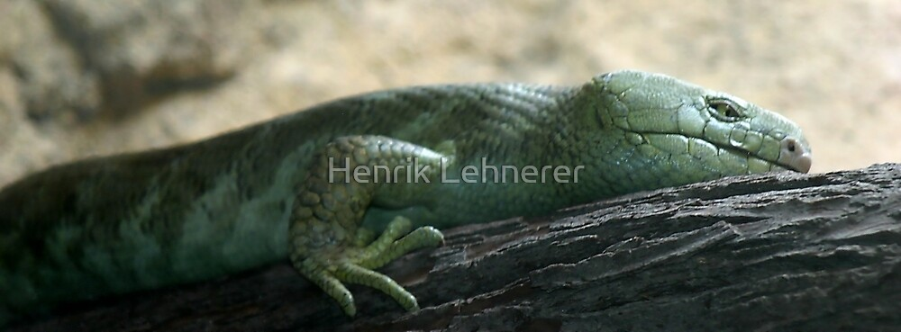 Prehensil Tailed Skink by Henrik Lehnerer