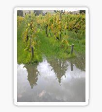 Vineyard reflection Sticker