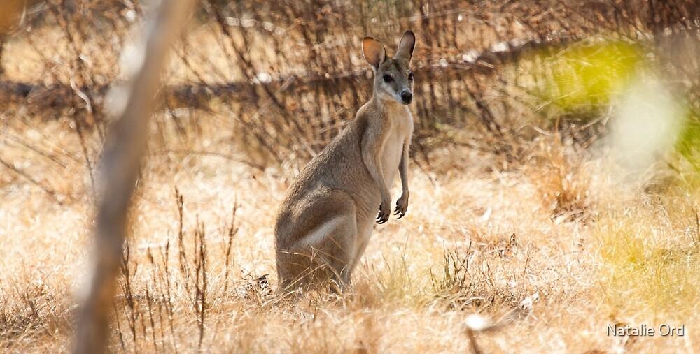 Kakadu Roo by Natalie Ord