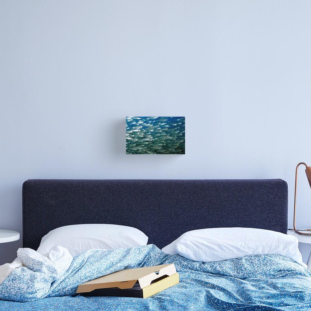 Glassfish Canvas Print