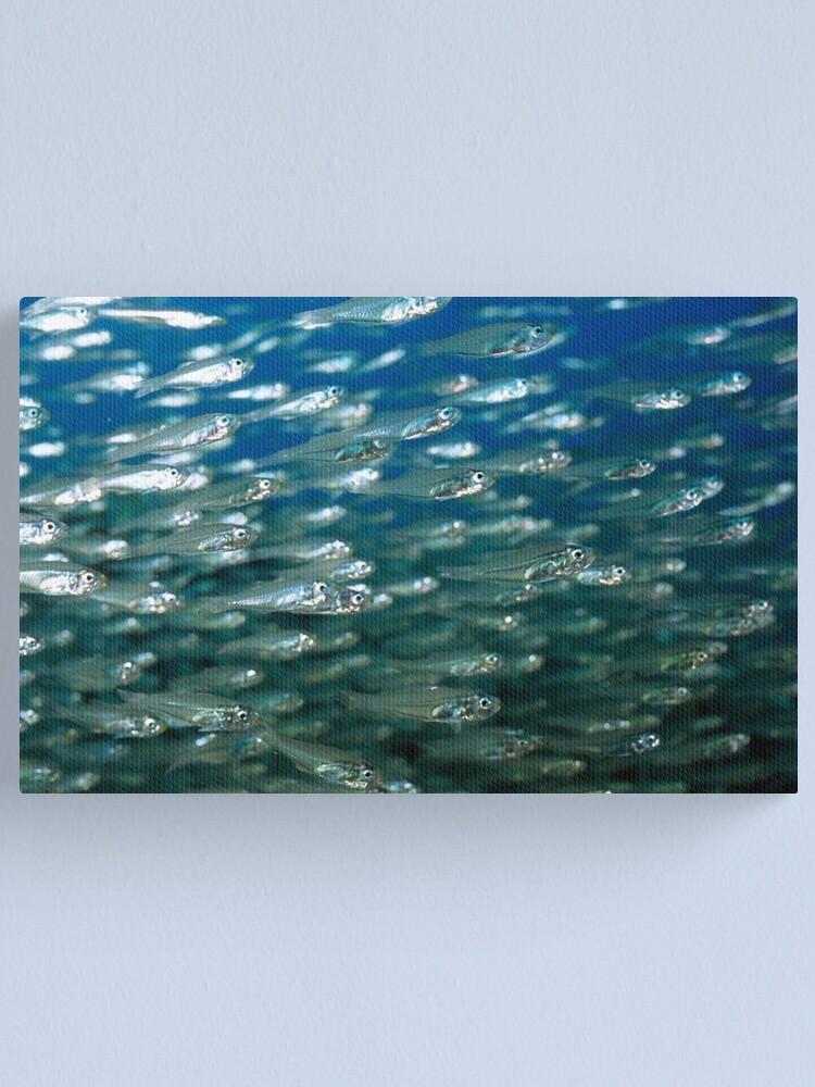Alternate view of Glassfish Canvas Print