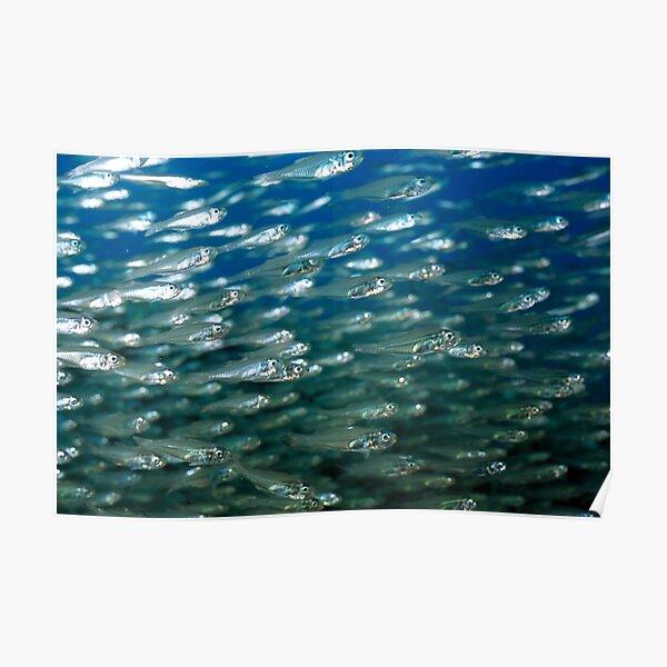 Glassfish Poster