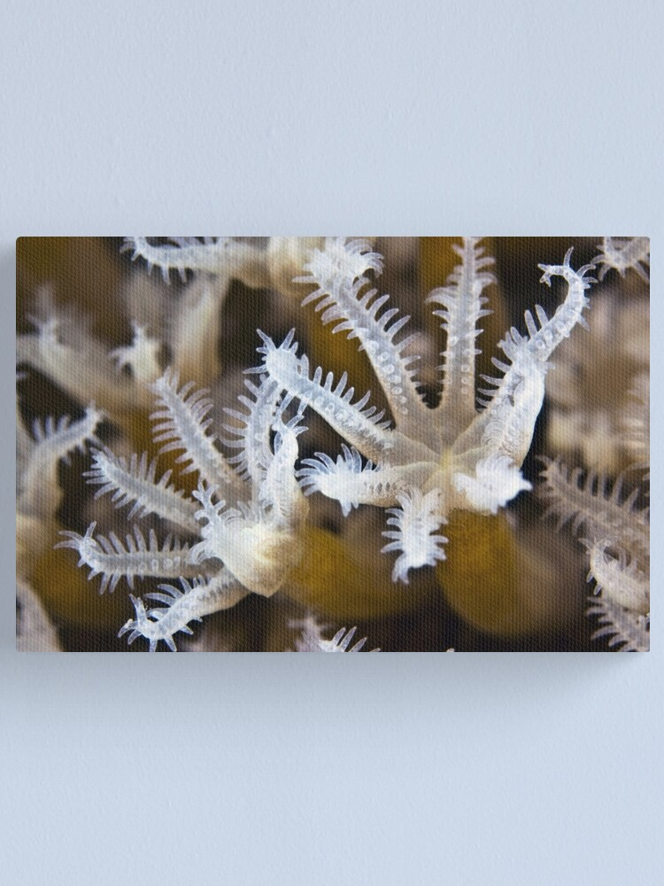 Alternate view of Crystal Canvas Print