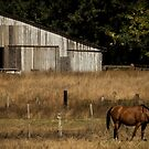 Grazing at Home by Laddie Halupa