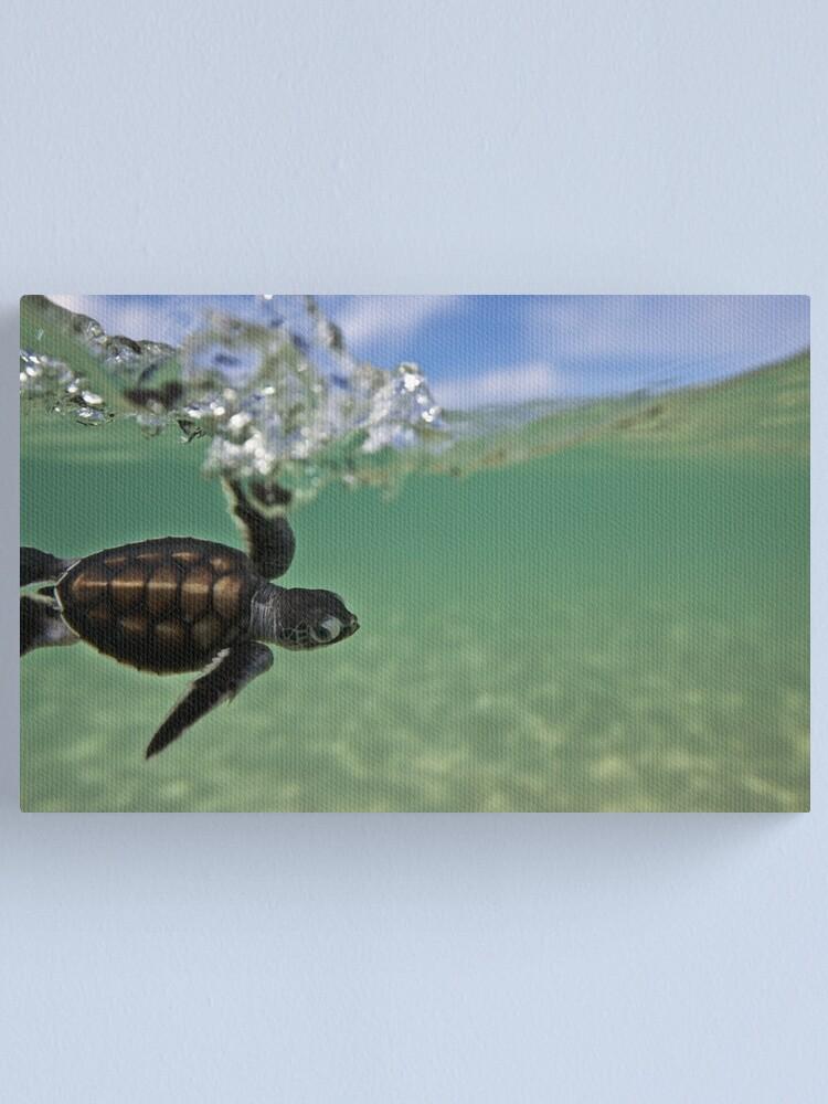 Alternate view of Baby surfing ninja turtle Canvas Print