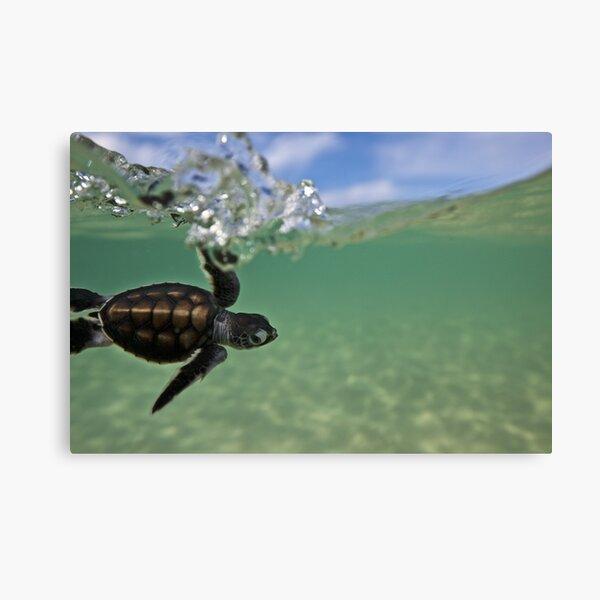 Baby surfing ninja turtle Canvas Print