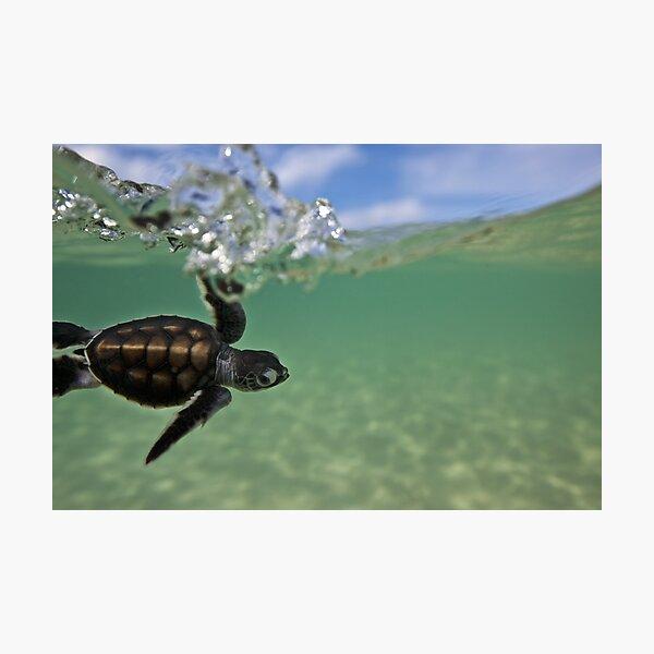 Baby surfing ninja turtle Photographic Print