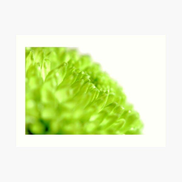 Bright lime chrysanthemum Art Print