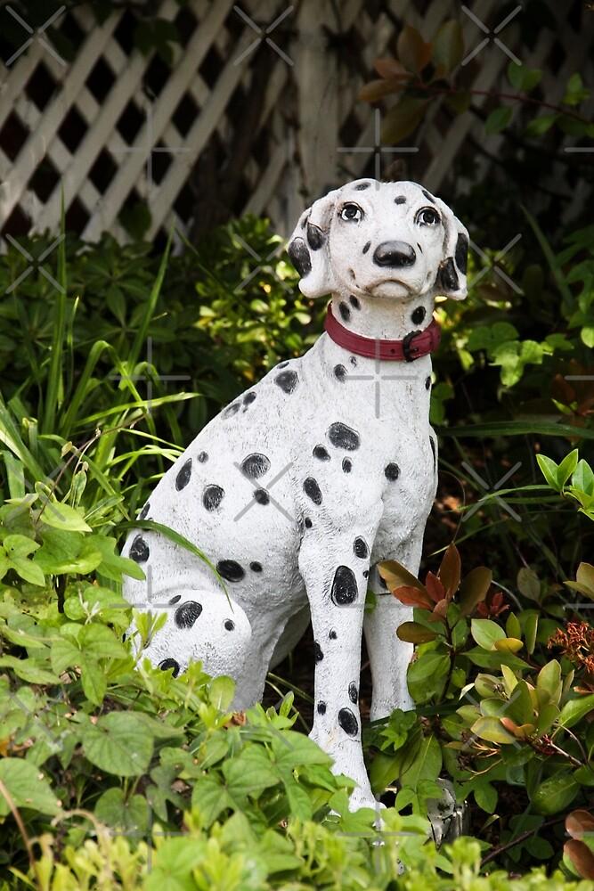 Garden Dalmatian by Heather Friedman