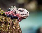 Marine Iguana on Espinola Island by Yukondick