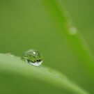 just a drop by Clare Colins