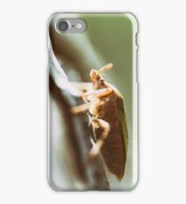 Shield Bug On A Tree Macro iPhone Case/Skin