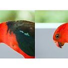 King Parrot for Mug by Paul Weston