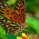 Butterfly Close Up by TJ Baccari Photography