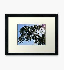 Nature - Tree 01 Framed Print
