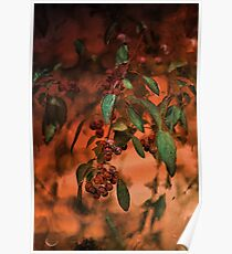 Red Berries on Tree at Sunset In Fall Poster