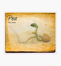 Pea Photographic Print