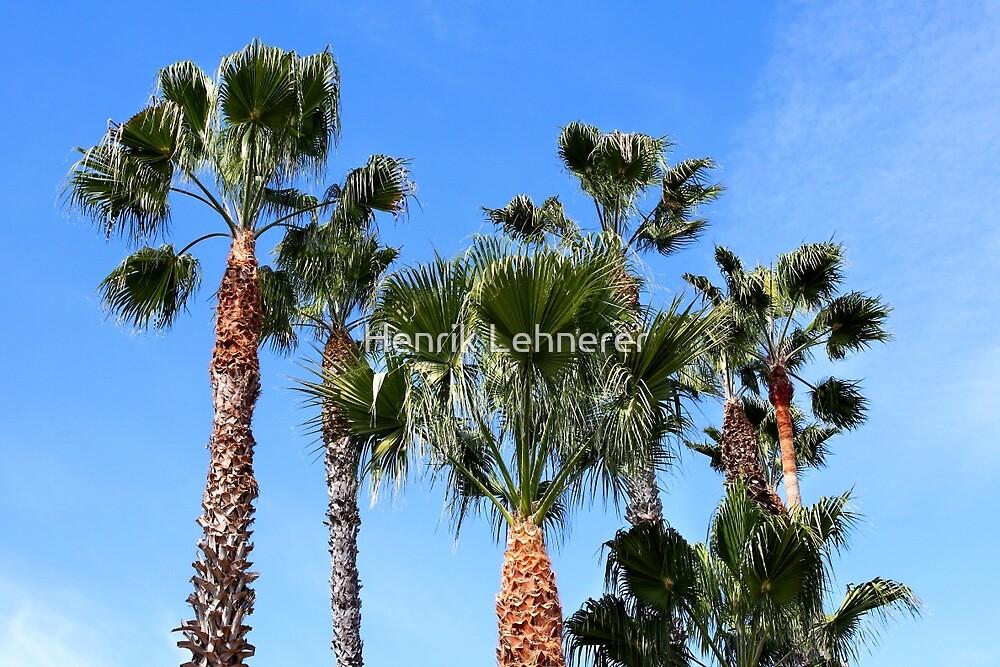 Ventura Palm Trees by Henrik Lehnerer