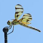 Dragon Fly by brendalynn52