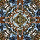 Eucalyptopia by V1mage