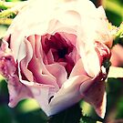 END OF SUMMER ROSE 065 by Laura E  Shafer