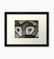 Snake Scales Framed Print