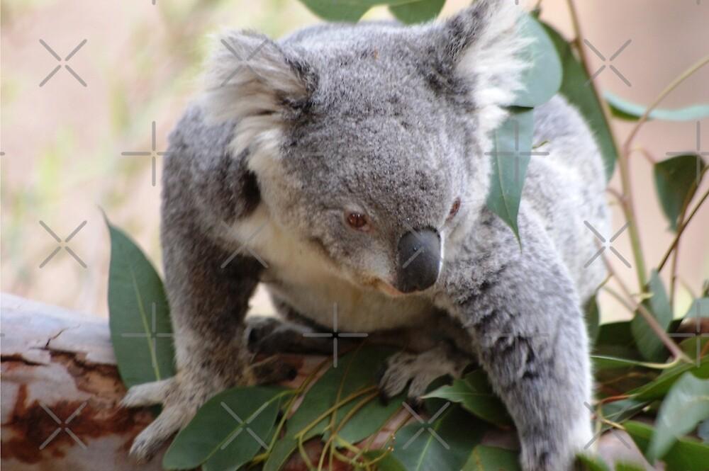 Koala baby by loiteke