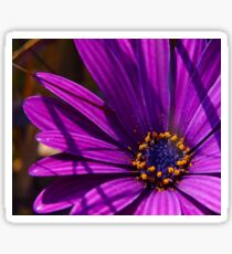 Purple African Daisy Close Up Sticker