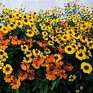 Mr. August sent flowers to Mrs. September by Bluesrose