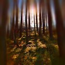 Forest Light 9 by Dave Harnetty