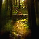 Forest Light 3. by Dave Harnetty