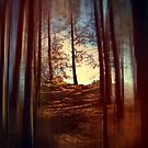 Forest Light 2. by Dave Harnetty