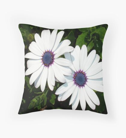 A Pair of Pristine White African Daisies Throw Pillow