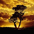 Tree Dance 2 by Dave Harnetty