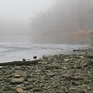 Haunting Morning on the River by Veronica Schultz