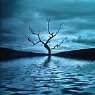Tree Blue by Dave Harnetty